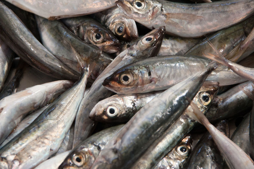 Close-up Day Fish Food Food And Drink Freshness Healthy Eating Indoors  Market No People Retail  Seafood