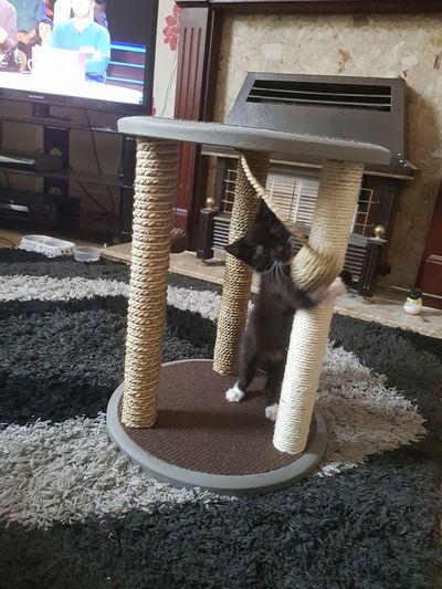 My Cat Cats Cat