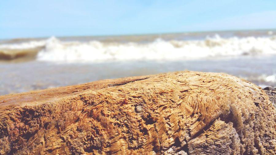 Close-up of beach against sky