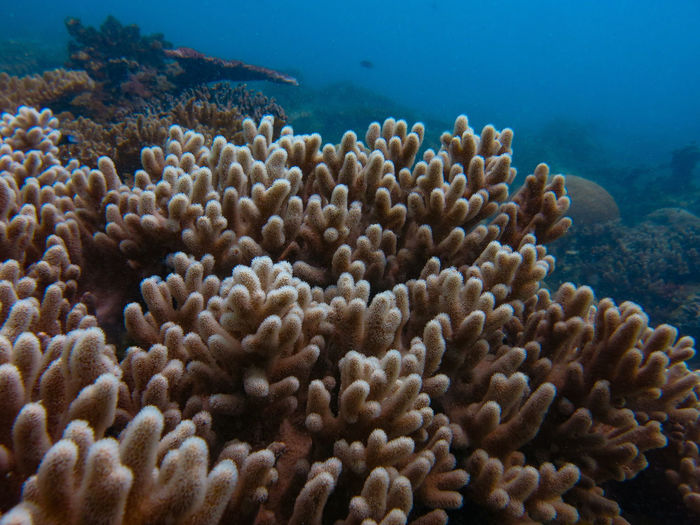 Coral found at coral reef area at tioman island, malaysia