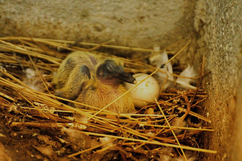 Nest Nature Bird No People Outdoors Animal Themes Bird Nests Egg Mother Care House Safety Protection Sweet Home