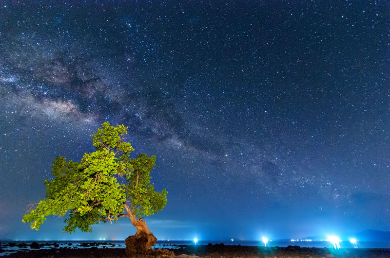 milky way rise above trees