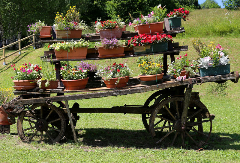 very old wooden cart festooned with many pots of flowers in the meadow in the mountains Gardening Horse Cart Retro Transportation Trentino Alto Adige Trento Wheel Wheel Cart Bolzano Cart Chariot Charriot Decoration Decorations Field Flower Freshness Garden Growth Nature Outdoor Photography Outdoors Plant Vintage Wooden Cart