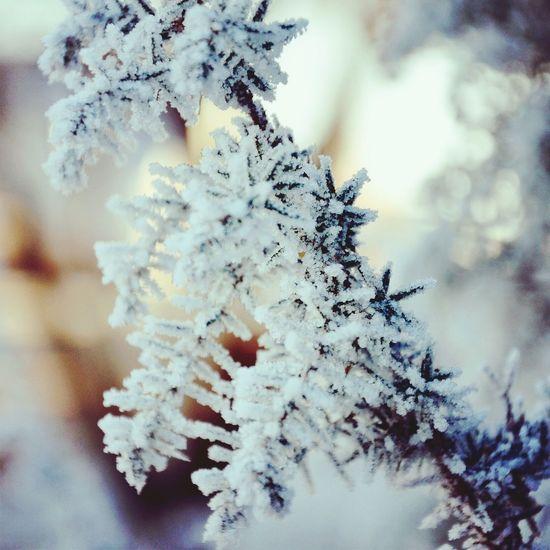 Зима - она такая!)