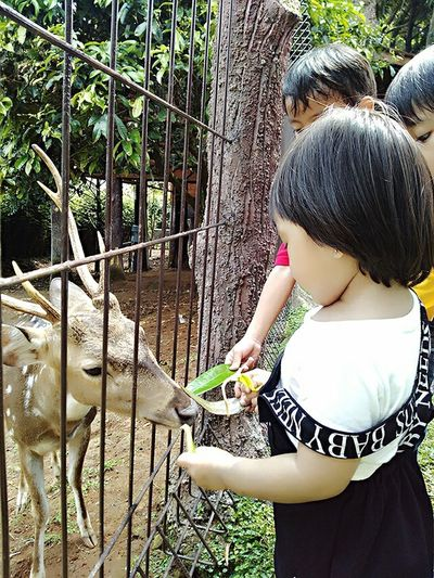 Childhood Togetherness Animal Eating From Hand