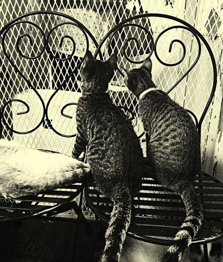 Cat cafe Cat