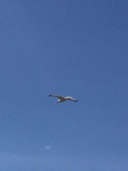 Animals In The Wild Animal Wildlife Vertebrate Animal Themes Animal Flying Spread Wings
