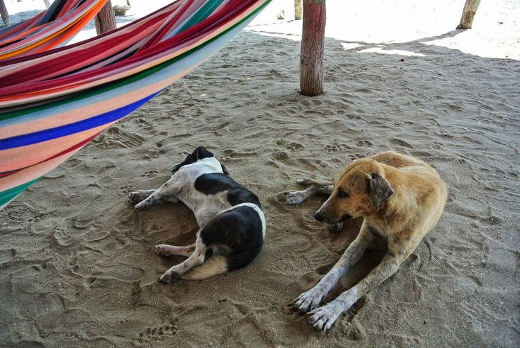 High angle view of dog resting on beach