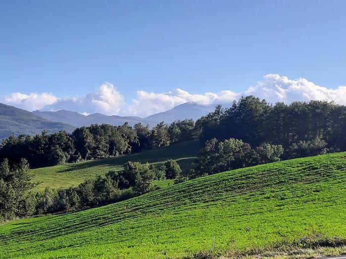 Tea Crop Tree