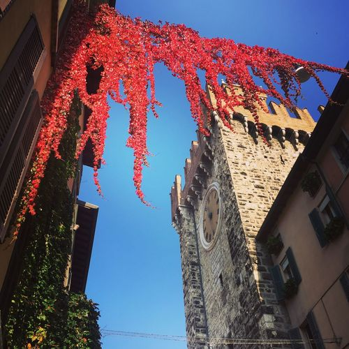 Torre Della Pallata Building Exterior Architecture Like A Tourist In My Town City Autumn Autumn Leaves Autumn In The City Sky Clock
