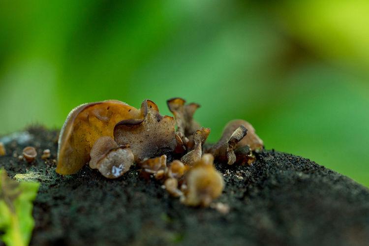 Close-up of a mushrooms
