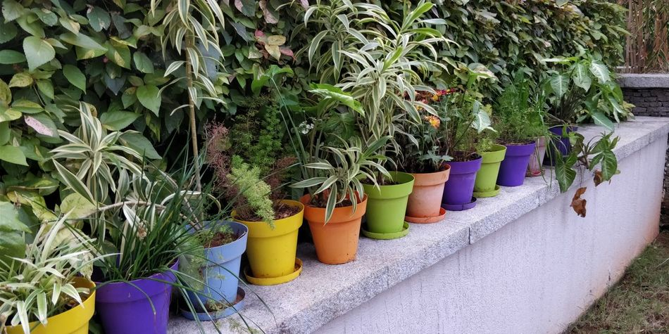 morning color flower pots Morning Morning Light Morning Colours Colors Plant Plants Garden Garden Photography Backgrounds Nature Morning Nature  Early Morning Early Morning Light Early Morning Sunlight Colourful Color Portrait Bright Bright Colors Bright Morning