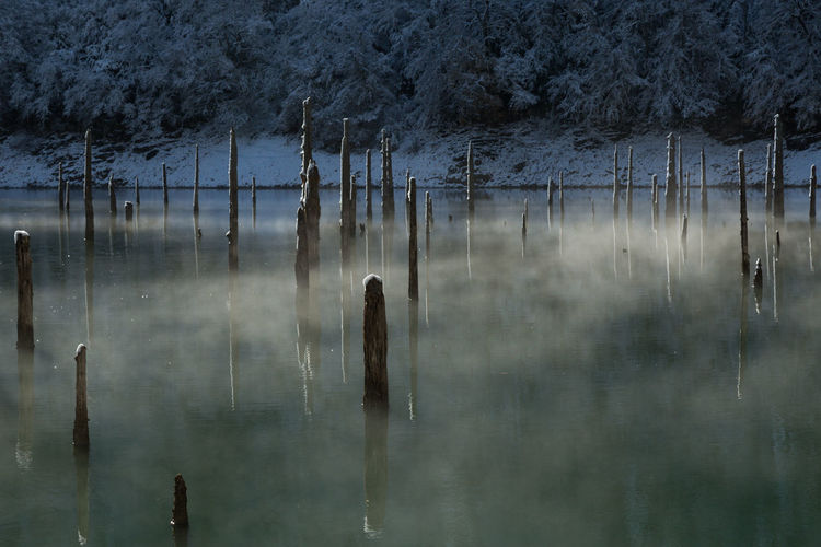 Wooden poles in calm lake