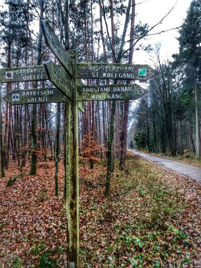 Weathered Signpost In The Woods Bavarian Border Forest Walkway Wet Winter Brown Leafs Landscape Tranquillity Spessart Forest December 2017 EyeEm Ready   AI Now
