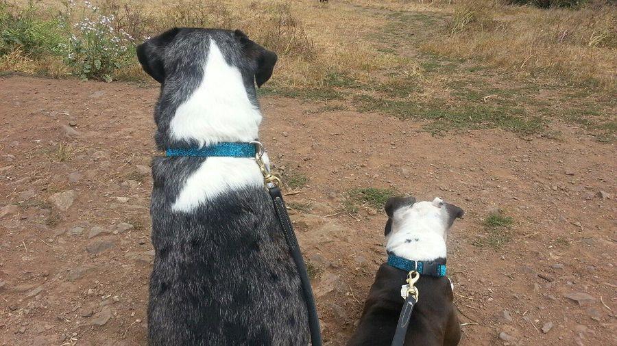 Pets Corner Toast The Dog Spoon The Dog Catahoula Leopard Dog Kite Hill