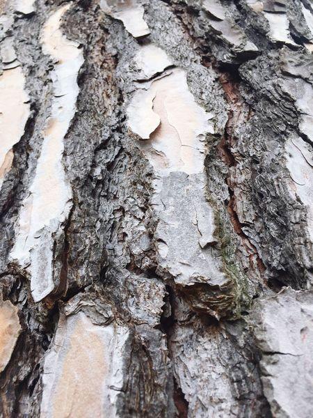 Wood's life
