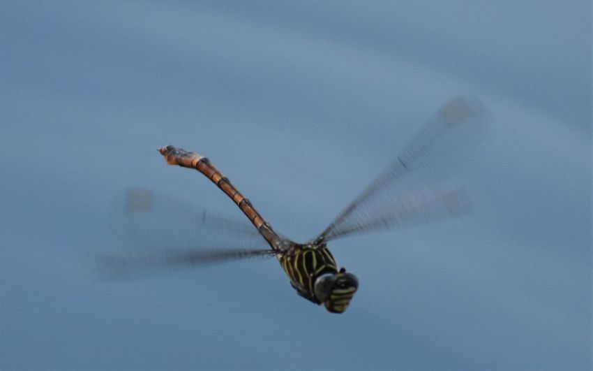 Close-up of butterfly flying