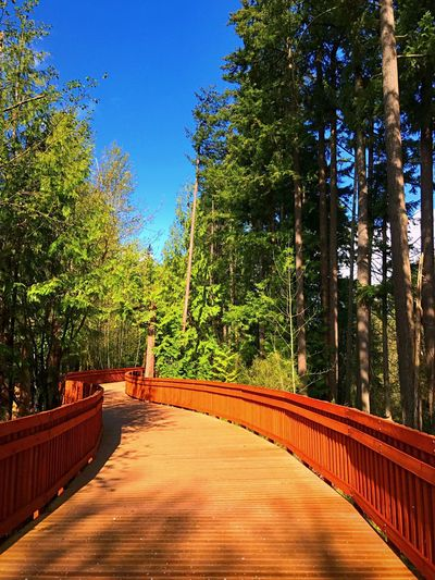 Tualatin River Greenway Trail Tree Wood - Material Day Growth No People Outdoors Nature Blue Sunlight Forest Beauty In Nature Clear Sky Sky Tualatin River Tualatin
