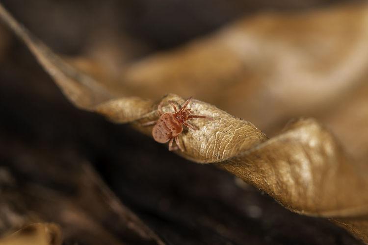 Close-up of spider on dry leaf