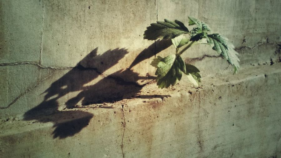 Shadow of plant on wall