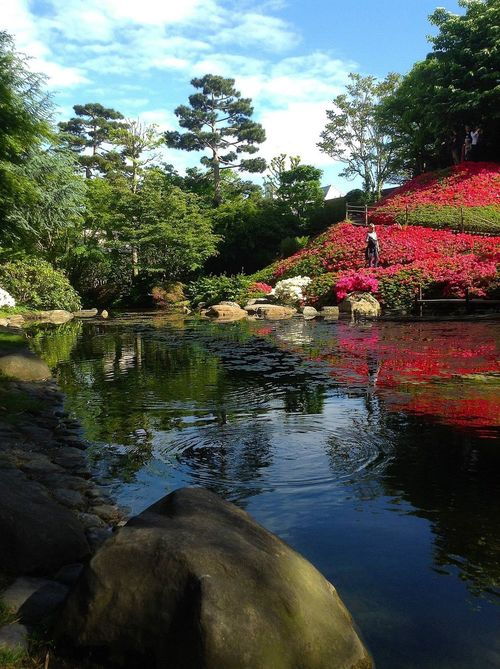 Nature Paris, France  Jardin Albert KHAN Albert KHAN étang Jardin Japonais Jardin Nenuphar Fleurs Musée Albert KHAN, PARIS -FRANCE-