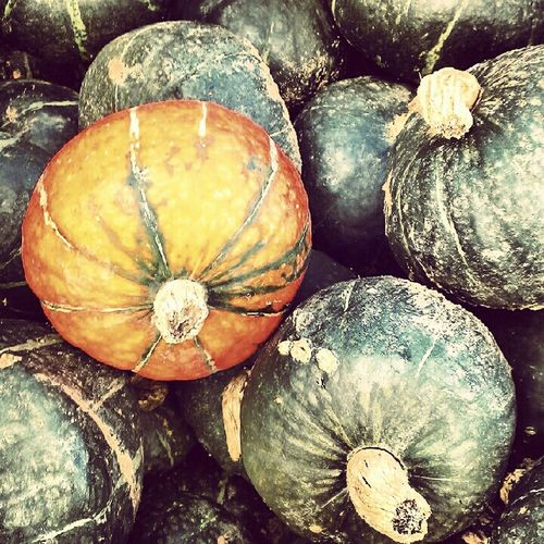Nature Colors Pumpkins Contrast Gourds Complimentary