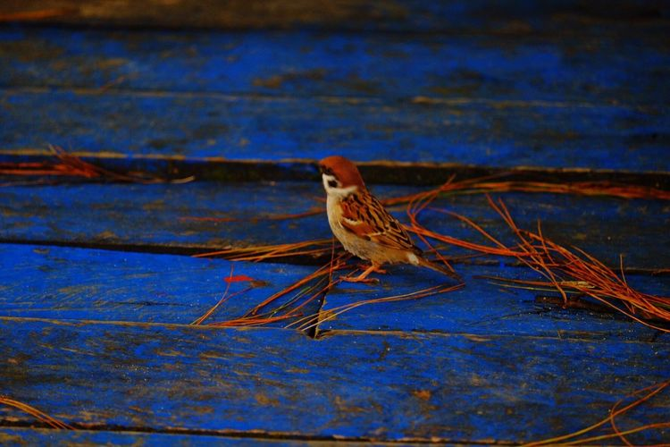 Moments Memories One Animal Bird No People Outdoors Hobbyphotography Love To Take Photos ❤ Eyeem Philipines Rizal Philippines