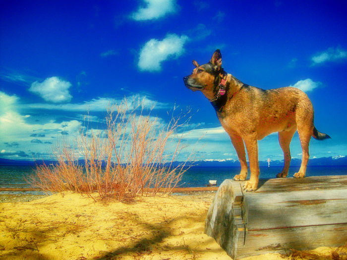 Silhouette of dog against blue sky