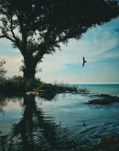 Freezing INDONESIA Nature Bird Flying Landscape Mid-air Mobilephotography Nature Reflection Silhouette Sky Tree Water Waterfall first eyeem photo