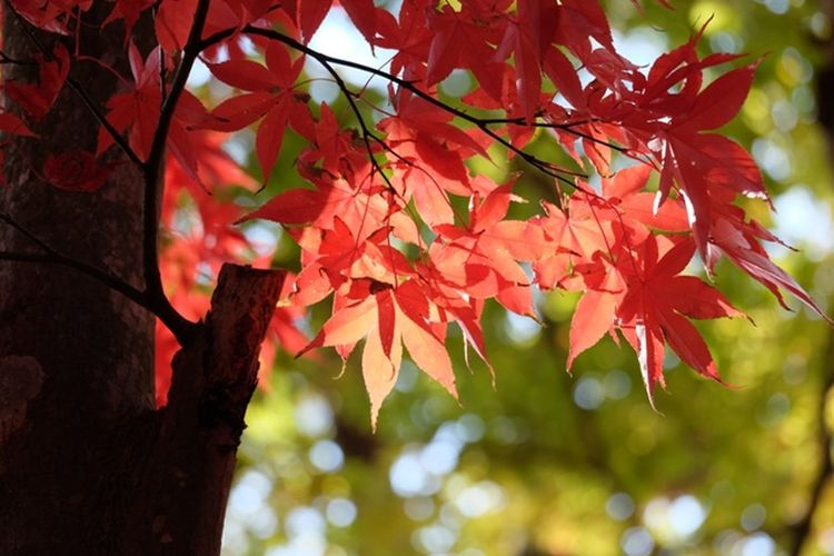 Light And Shadow ヒカリ The Purist (no Edit, No Filter) Fall Beauty Beauty In Nature 散歩日和 紅葉 玉ボケ