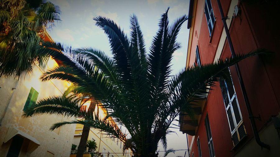 Getting Creative Alassio Sun Houses Holdmyhand Sunshine Palm Trees