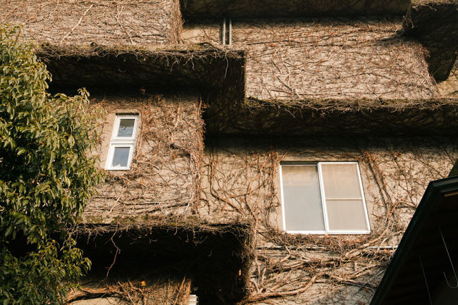 Abandoned Architecture Building Exterior Built Structure Design House Japanese Style Old Outdoors Residential Structure Shape Vegetation Vinewood Window Wood