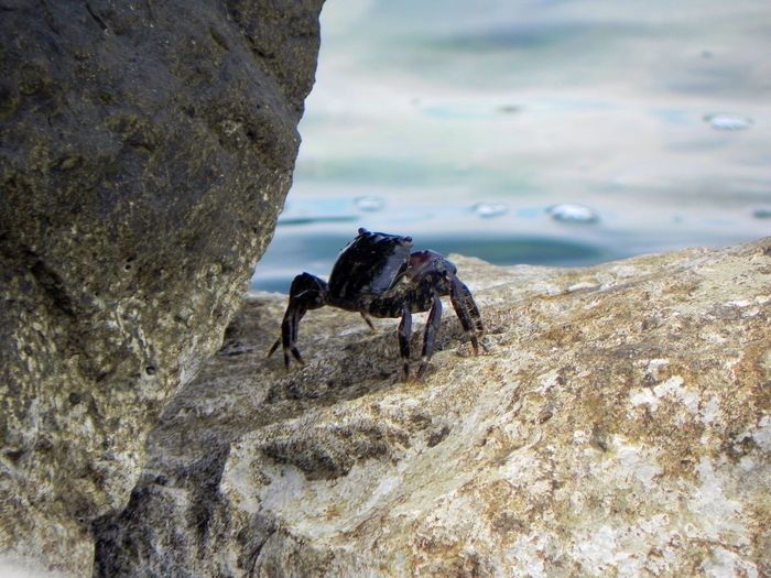 Close-up of horse standing on rock