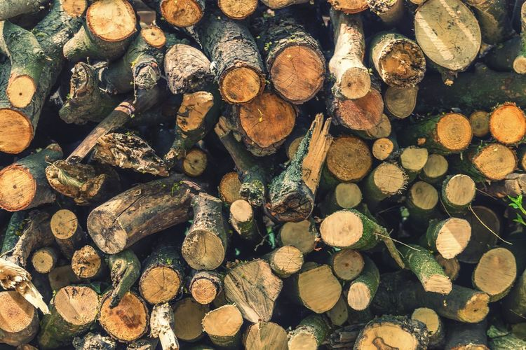 A bunch of wood packed in order Timber Stack Log Full Frame Backgrounds Woodpile Day Forestry Industry Wood - Material Deforestation No People Outdoors Wood