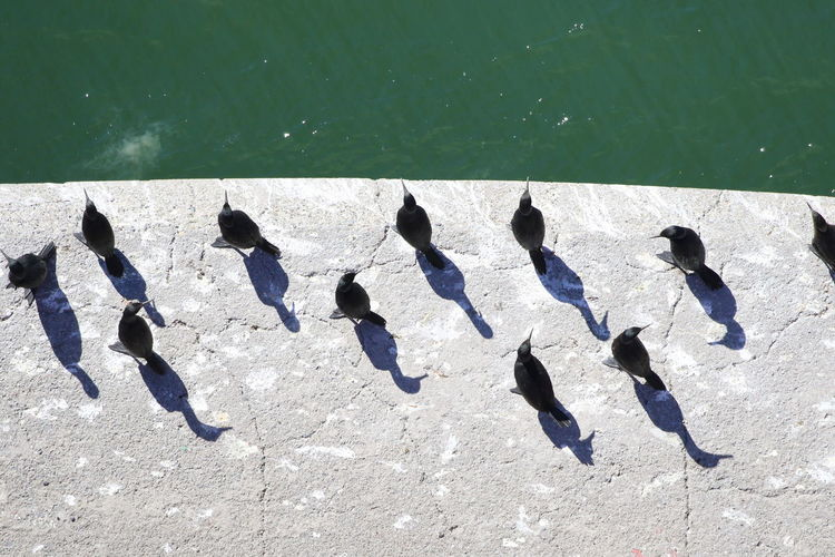 High angle view of birds