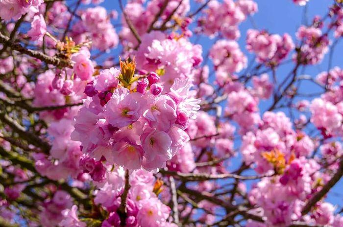 Spring Into Spring spring flowers