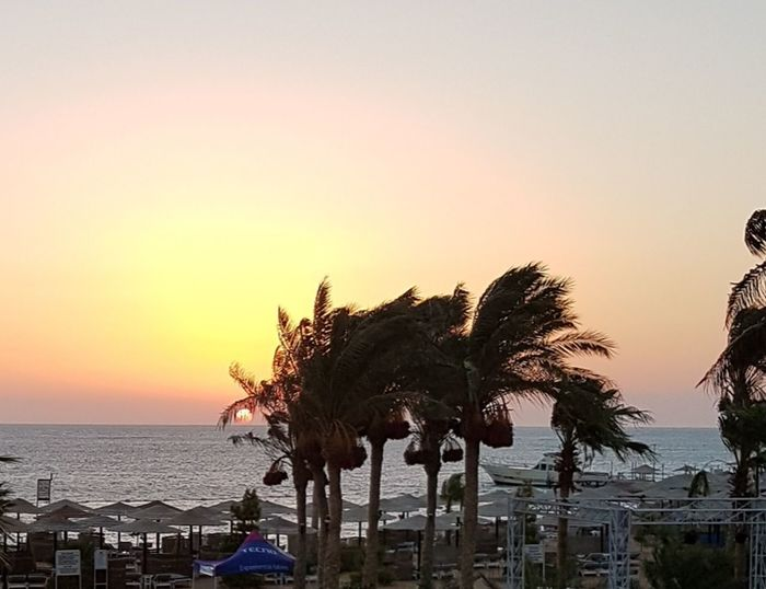 Red Sea,Hurghada,Egypt Sunrise Sea Palm Tree Beach Summer Silhouette Sky Beach Umbrella