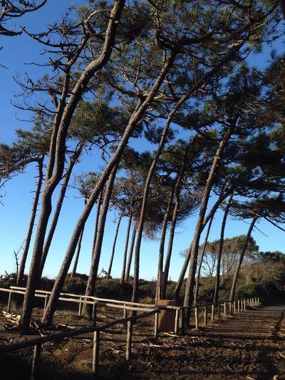 Cecina Mare Beach Pineta Perfect Place For Sport Ein Toller Ort Zum Entspannen Und Relaxen Tuscany