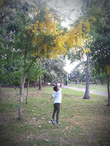 Tree Growth Real People Park - Man Made Space Full Length Nature One Person Casual Clothing Outdoors Grass Beauty In Nature People Lifestyles A Boy Lifestyle Sport Nonthaburi Thailand Evening Evening Sky Jumpshot Jumping !