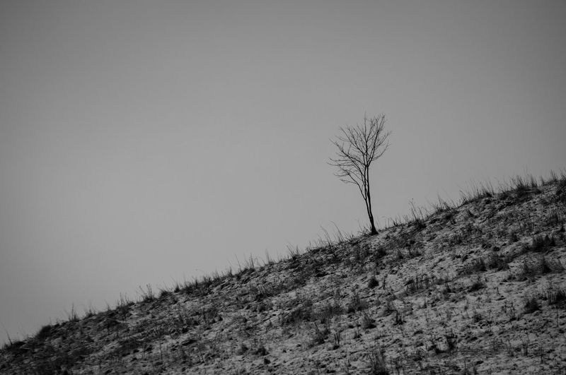 Low angle view of bare tree on field against clear sky