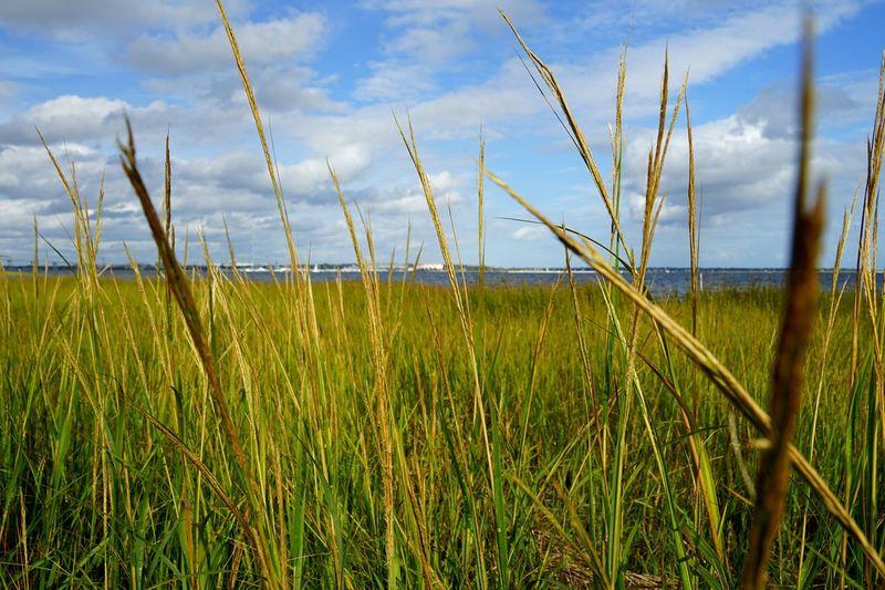 Grass Day