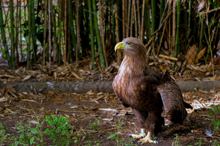 Close-Up Of Eagle In Zoo
