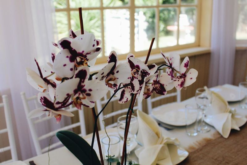 Decoration Orchid Indoors  Home Interior No People Decoration Table Celebration Window Close-up Flowering Plant Plant Flower