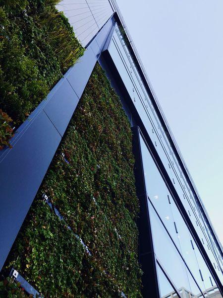 STLSQA Cityscapes Green Architecture Fukuoka Let's Do It Chic! EyeEm Nature Lover EyeEm Meetup Fukuoka