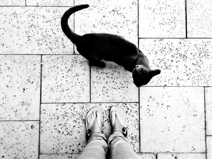From Where I Stand Black And White Cat Black Cat Eye4photography  Mobilephotography Mobile Photography IPhone IPhoneography Phonography  Black And White Photography Mobile Black & White The Street Photographer - 2016 EyeEm Awards