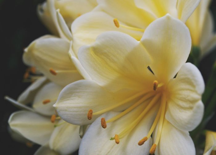 Background Pretty Yellow Flowers Flower Flowering Plant Fragility Vulnerability  Plant Freshness Petal Beauty In Nature Inflorescence Flower Head Close-up Yellow White Color Pollen Focus On Foreground Nature Stamen No People Botany Springtime Decadence