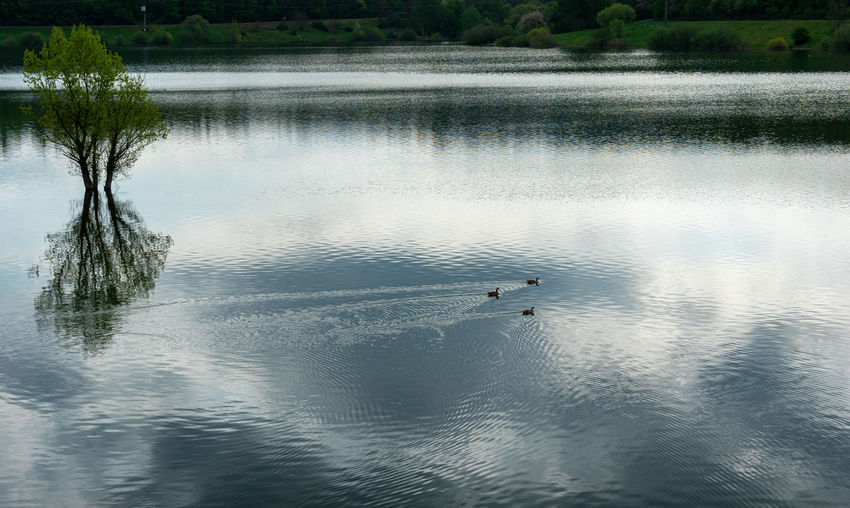 High angle view of birds swimming in lake