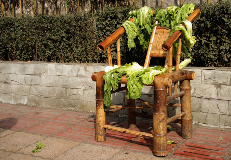BEIJING北京CHINA中国BEAUTY Chinese Food Sidewalk Sunny Bamboo Bamboo Chair Chair Chinese Community Garden Day Drying Drying Food Drying Lettuce Freshness Front Or Back Yard Growth Healthy Eating Nature No People Outdoors Plant