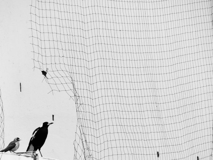 Low angle view of birds perching by net against wall