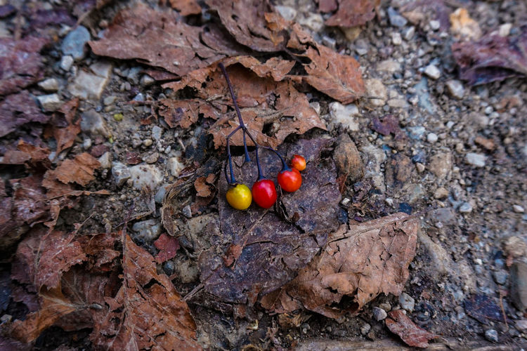 High angle view of berries on rock